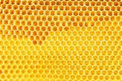自然蜂蜜在蜂窝背景中 免版税库存照片