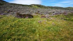 Φυσικός δρόμος στο επιτραπέζιο βουνό Καίηπ Τάουν Στοκ φωτογραφία με δικαίωμα ελεύθερης χρήσης