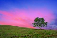 在日出的偏僻的树与红色天空 库存照片