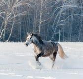 马在冬天森林里 免版税库存图片