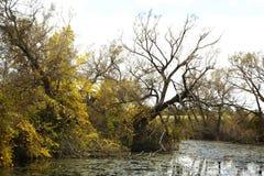 池塘在秋天森林里 免版税库存照片