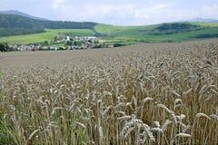 пшеница ландшафта поля осени Стоковая Фотография