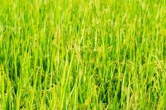 米 免版税图库摄影