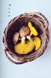 Съестные грибы Стоковые Изображения RF