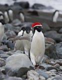 滑稽的圣诞老人企鹅 免版税库存图片