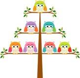 在树的猫头鹰 图库摄影