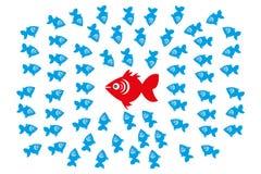 在集体领导和管理概念的鱼 库存图片