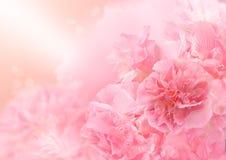 桃红色开花背景,抽象大花,美丽的花 免版税库存照片