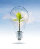 与金钱绿色树的电灯泡光里面在天蓝色云彩背景 图库摄影