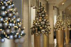 Χριστουγεννιάτικα δέντρα στη λεωφόρο πολυτέλειας Στοκ Εικόνες