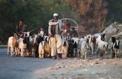 在拍打谷,巴基斯坦的生活 库存照片