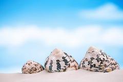 在白色佛罗里达海滩沙子的热带海壳在太阳锂下 免版税图库摄影