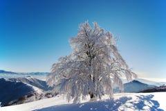 结霜的树在蓝天下 免版税图库摄影
