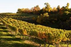 秋天葡萄园在弗吉尼亚 免版税库存照片