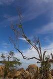 在海滩的树 库存照片