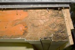 白蚁损伤 库存图片