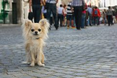 在街道的城市狗 图库摄影