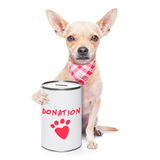 Σκυλί δωρεάς Στοκ εικόνες με δικαίωμα ελεύθερης χρήσης