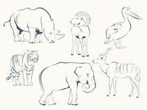 животные одичалые Стоковое Изображение RF