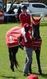 显示跳跃的马和车手-优胜者 库存照片