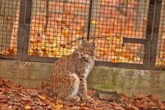天猫座-动物园-匈牙利 库存图片