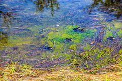 绿藻类和黄色草的颜色混合在水下 免版税图库摄影