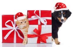 猫和狗与圣诞老人帽子和礼物 图库摄影