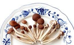 蘑菇茶结构树杨柳 库存图片