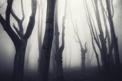 黑暗被困扰的森林在万圣夜 库存图片