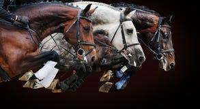 在跳跃的展示的三匹马,在棕色背景 免版税图库摄影