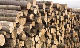 砍结构树 免版税库存照片