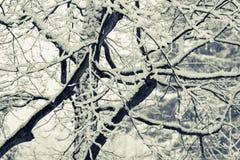 Шторм снега Стоковые Изображения RF