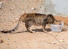 肮脏的离群野生猫画象  库存图片