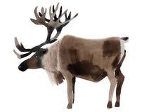 鹿的水彩例证 库存照片