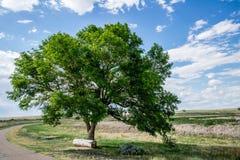 与日志长凳的绿色树在蓝天下 免版税图库摄影
