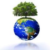 地球结构树 免版税库存照片