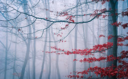 树在有薄雾的秋天森林里 免版税库存图片
