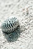 海滩海运小壳的岸 免版税图库摄影