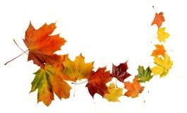 在白色隔绝的飞雪期间的秋叶 免版税库存图片