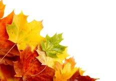 在白色隔绝的角落的秋叶 免版税图库摄影