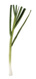 白色的背景接近的大蒜绿色 库存图片