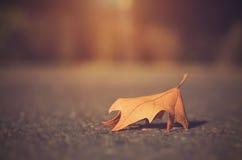 秋天干燥叶子 图库摄影