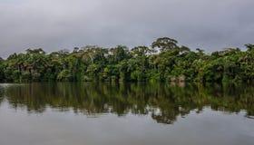 亚马逊密林 免版税库存照片