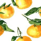 Безшовная картина с мандаринами Стоковые Изображения