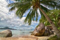 热带天堂-棕榈树特写镜头和美丽的沙滩 库存照片