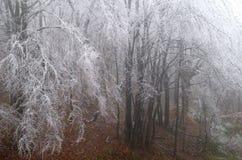 结霜的森林 库存图片