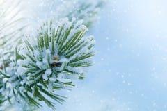 在云杉的圣诞树特写镜头的冬天霜 库存图片