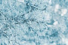 从用树冰、霜或者霜盖的杉树的冬天背景在一个多雪的森林里 免版税库存图片