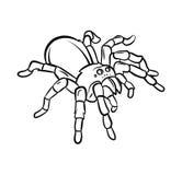 塔兰图拉毒蛛纹身花刺 库存图片