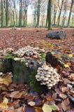 生长在一个树干的蘑菇在秋天 免版税库存照片
